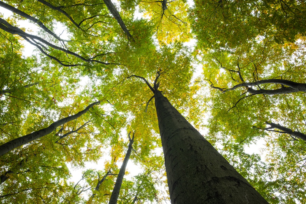 Low angle view of tall trees against the sky-1